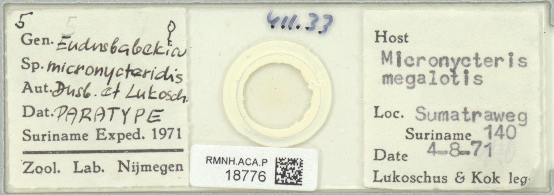 RMNH.ACA.P.18776 | Eudusbabekia micronycteridis