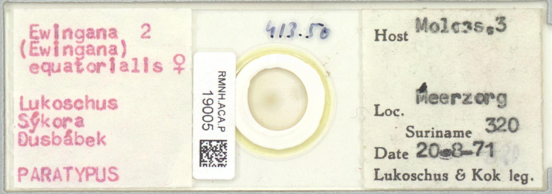 RMNH.ACA.P.19005 | Ewingana (Ewingana) equatorialis