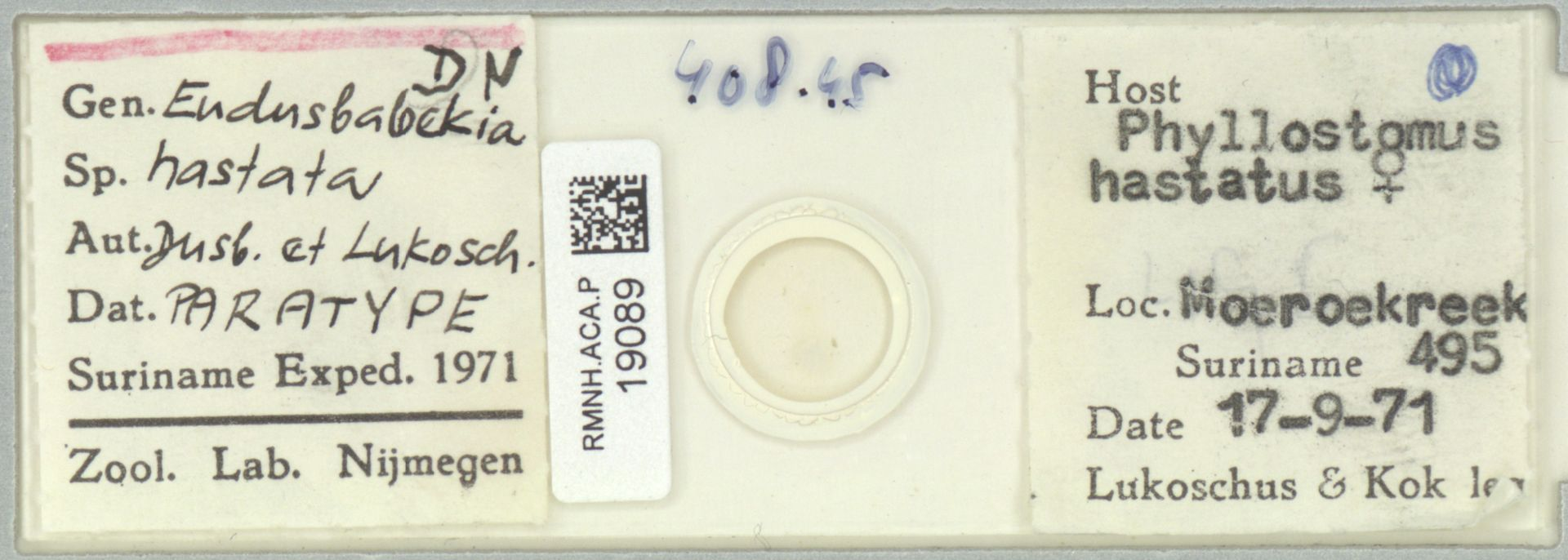 RMNH.ACA.P.19089 | Eudusbabekia hastata