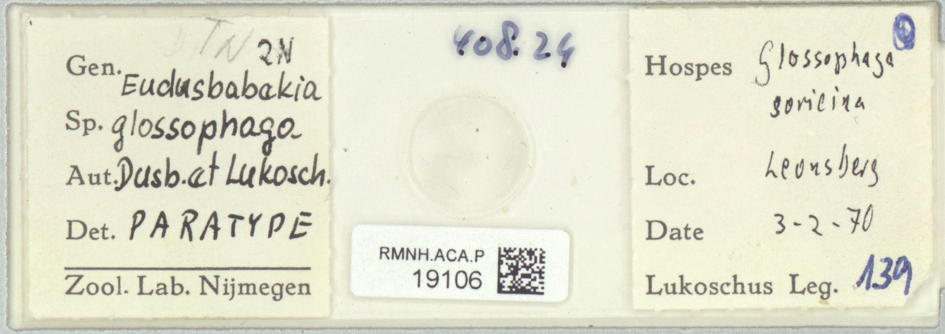 RMNH.ACA.P.19106 | Eudusbabekia glossophaga