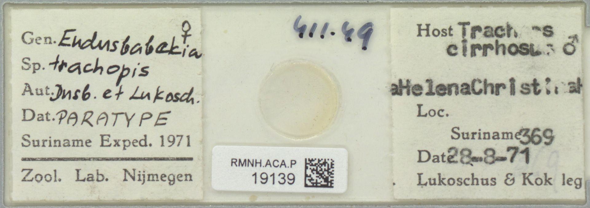RMNH.ACA.P.19139 | Eudusbabekia trachopis