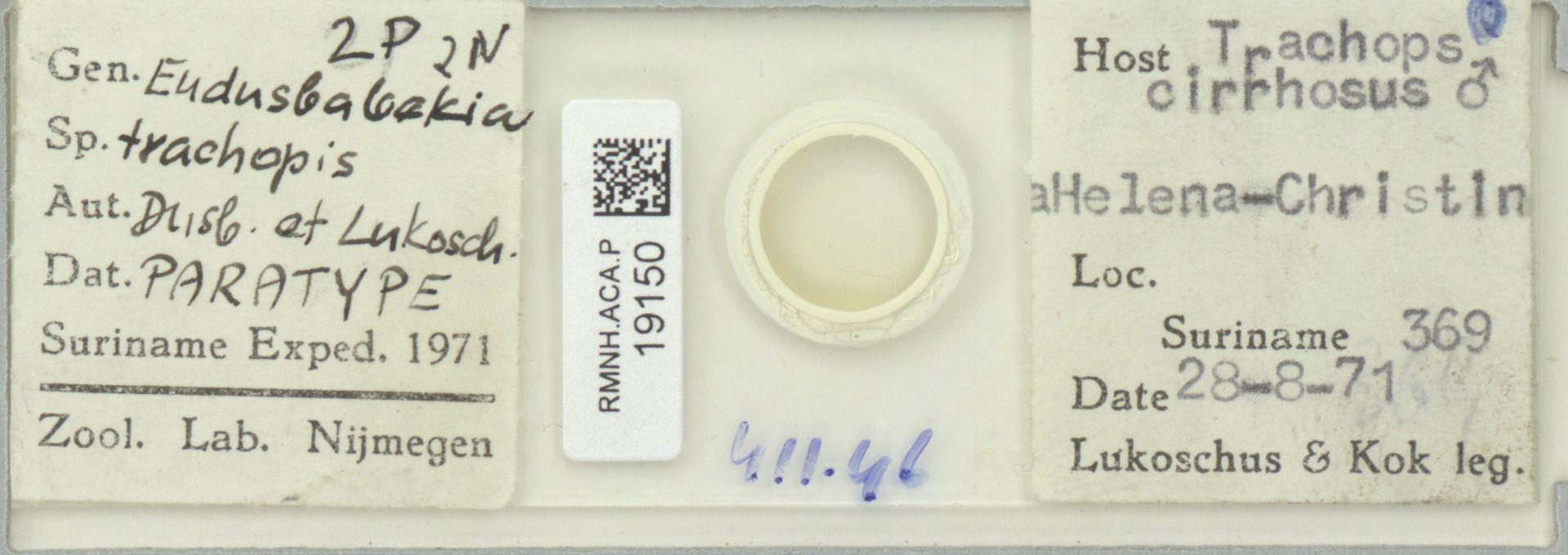 RMNH.ACA.P.19150 | Eudusbabekia trachopis