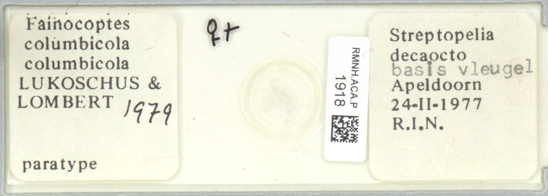 RMNH.ACA.P.1918 | Fainocoptes columbicula columbicula Lukoschus & Lombert, 1979