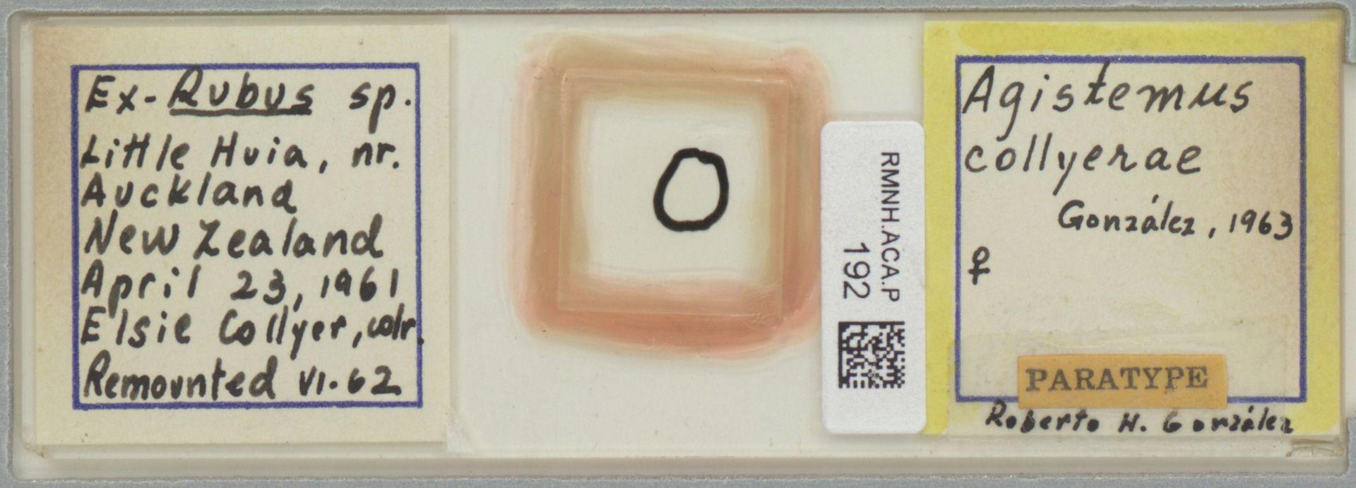RMNH.ACA.P.192 | Agistemus collyerae González, 1963