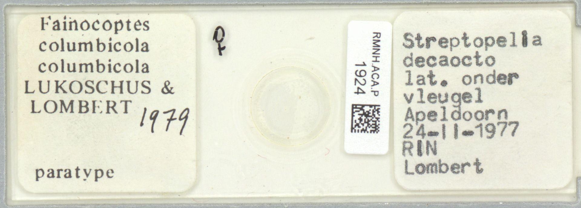 RMNH.ACA.P.1924 | Fainocoptes columbicula columbicula Lukoschus & Lombert, 1979