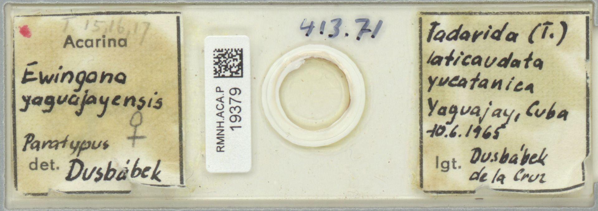 RMNH.ACA.P.19379 | Ewingana yaguajayensis
