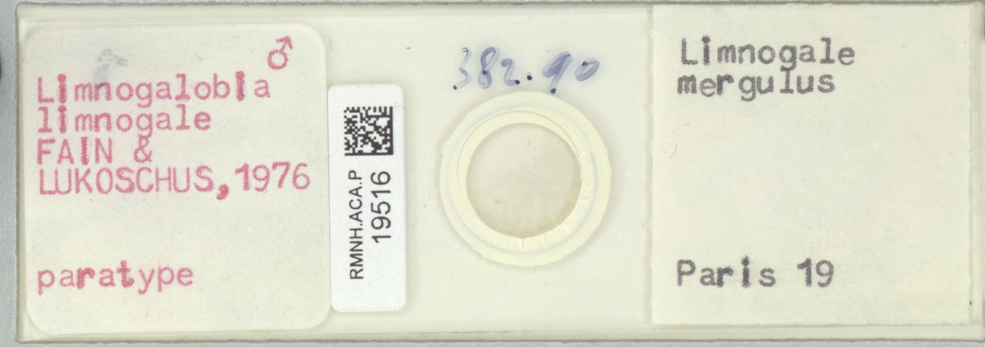 RMNH.ACA.P.19516 | Limnogalobia limnogale