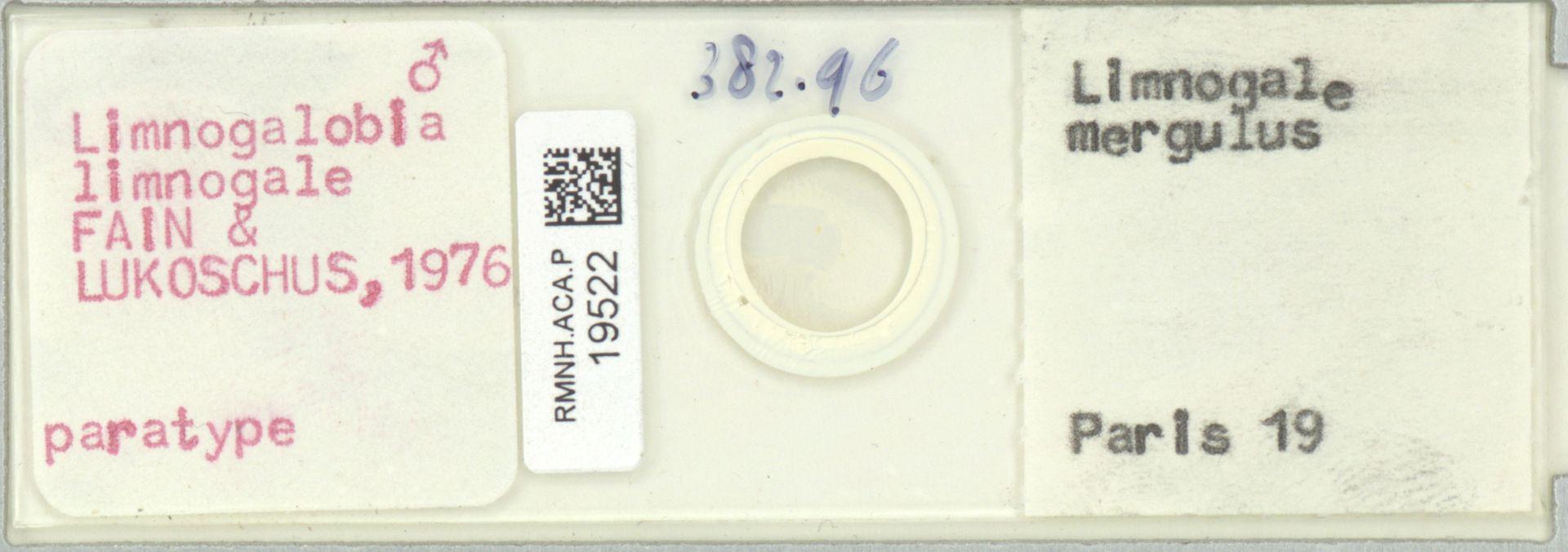 RMNH.ACA.P.19522 | Limnogalobia limnogale