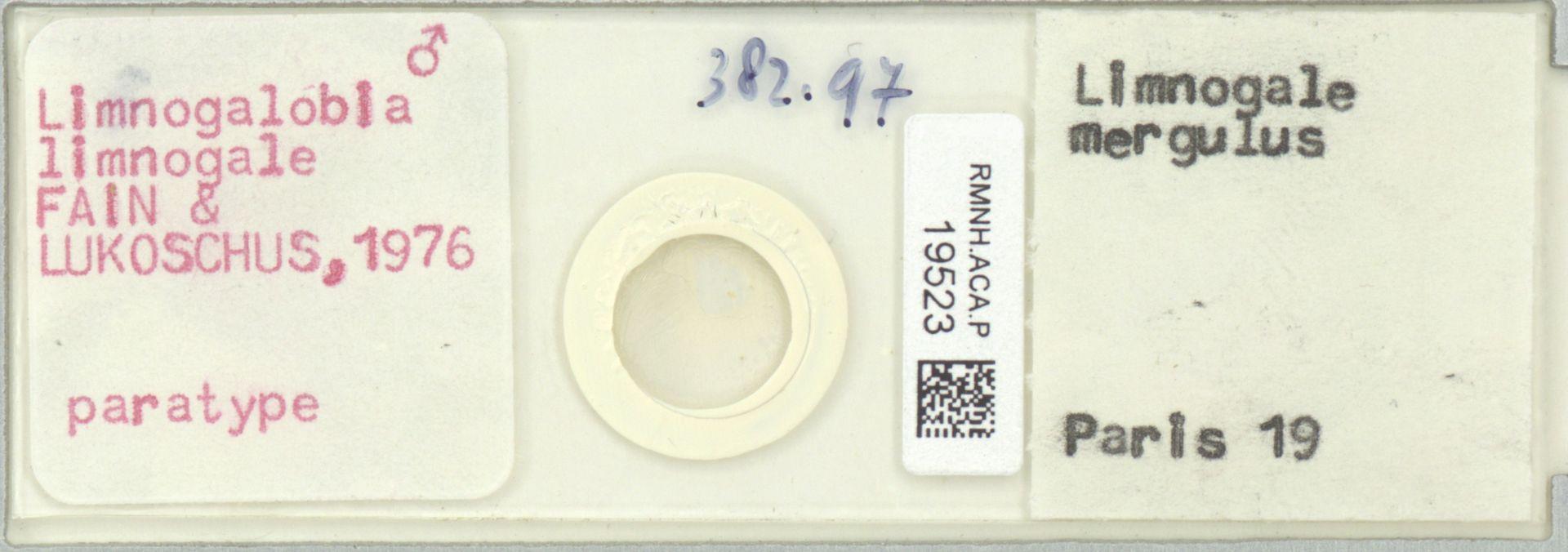 RMNH.ACA.P.19523 | Limnogalobia limnogale