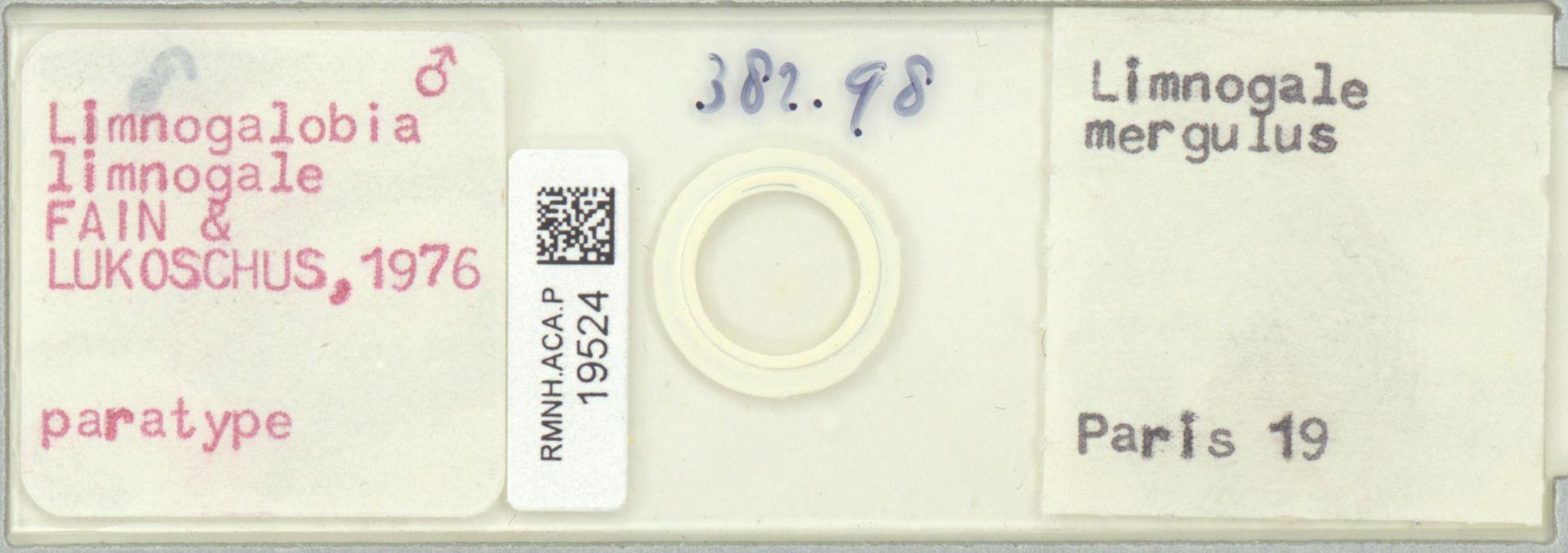 RMNH.ACA.P.19524 | Limnogalobia limnogale