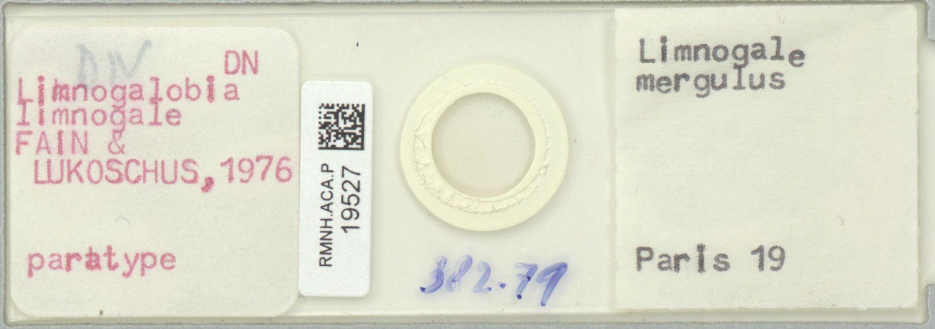 RMNH.ACA.P.19527 | Limnogalobia limnogale