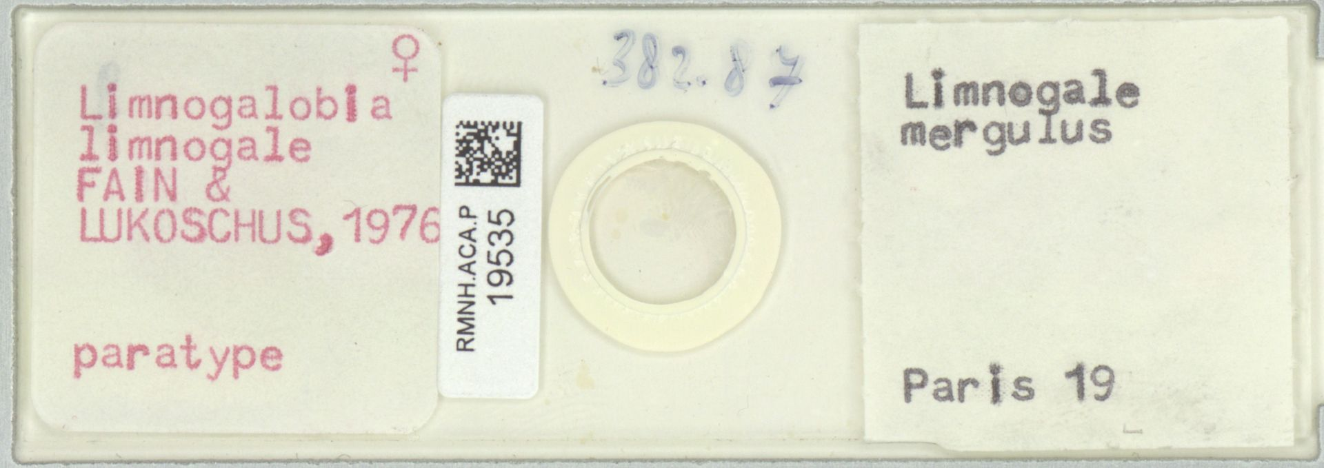 RMNH.ACA.P.19535 | Limnogalobia limnogale