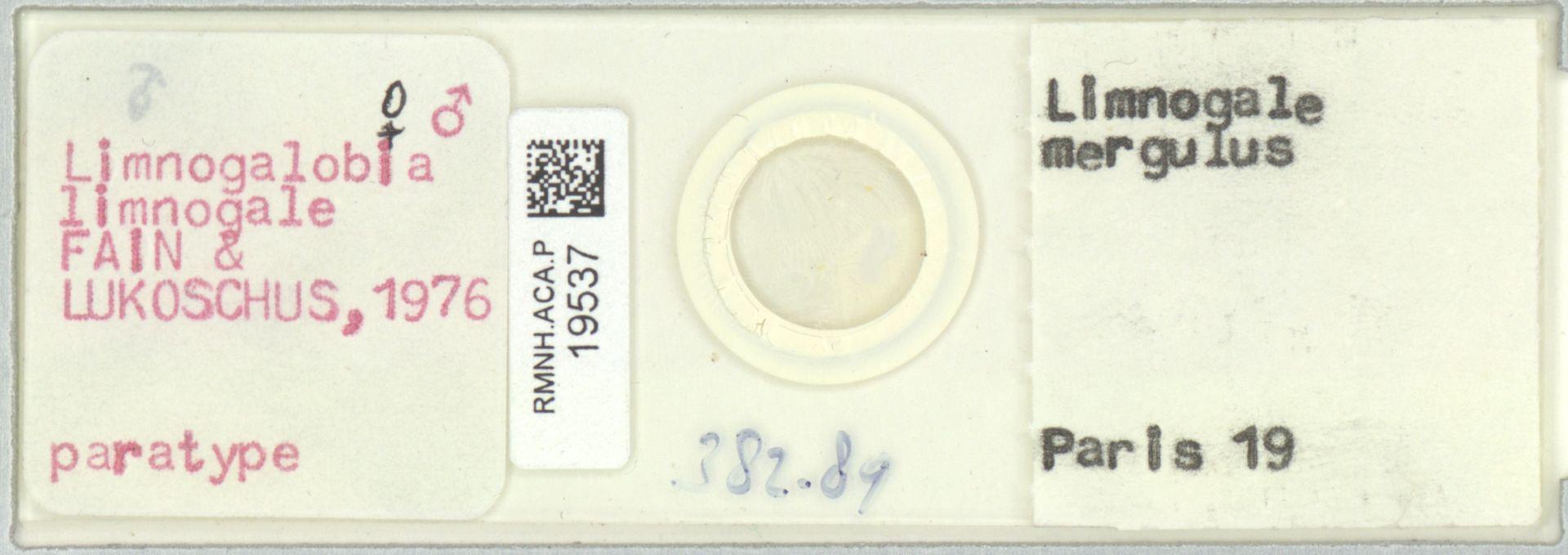 RMNH.ACA.P.19537 | Limnogalobia limnogale