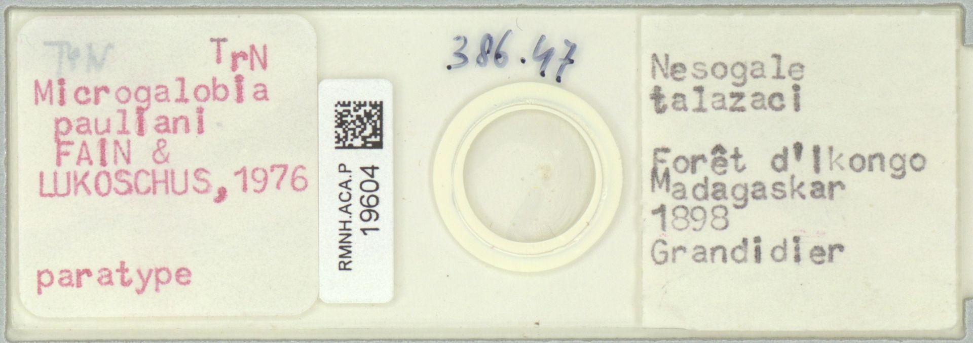 RMNH.ACA.P.19604 | Microgalobia pauliani