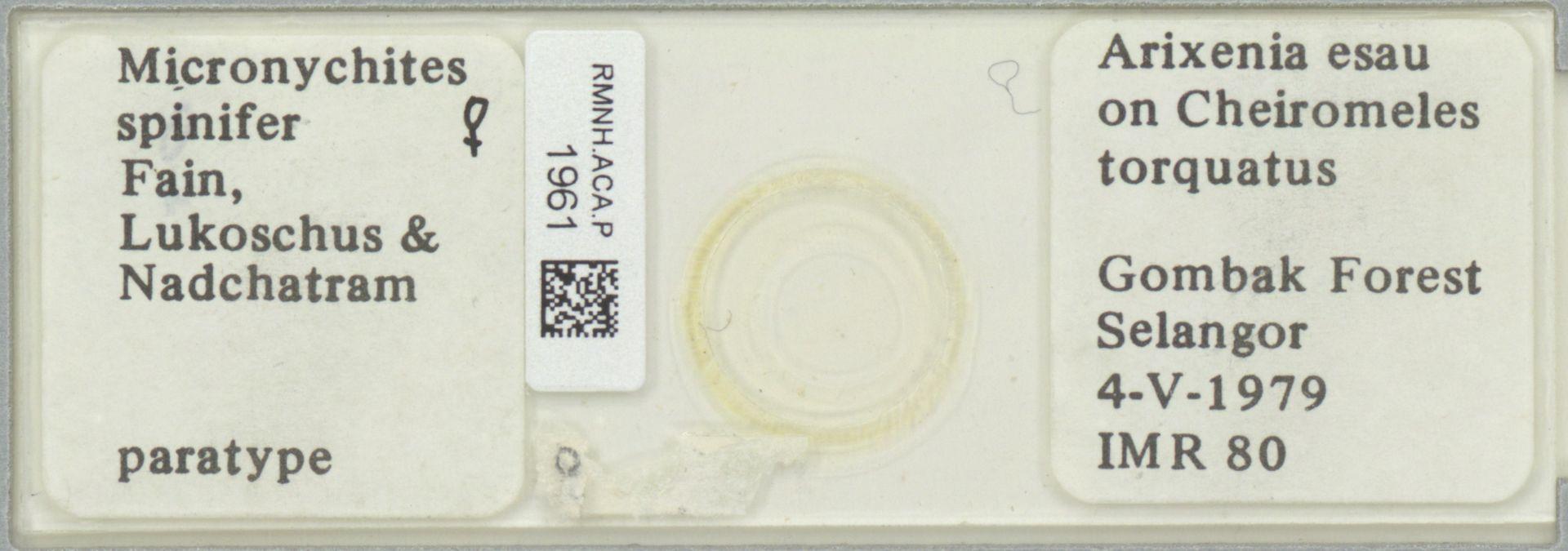 RMNH.ACA.P.1961 | Micronychites spinifer Fain, Lukoschus & Nadchatram
