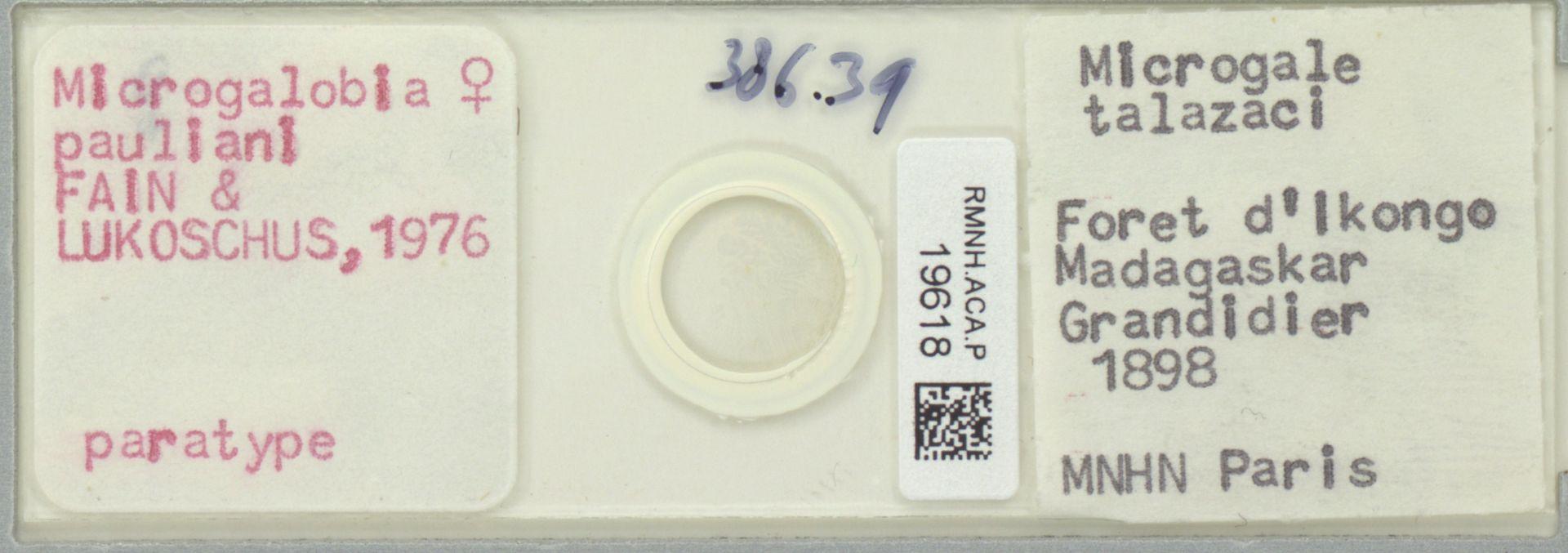 RMNH.ACA.P.19618 | Microgalobia pauliani