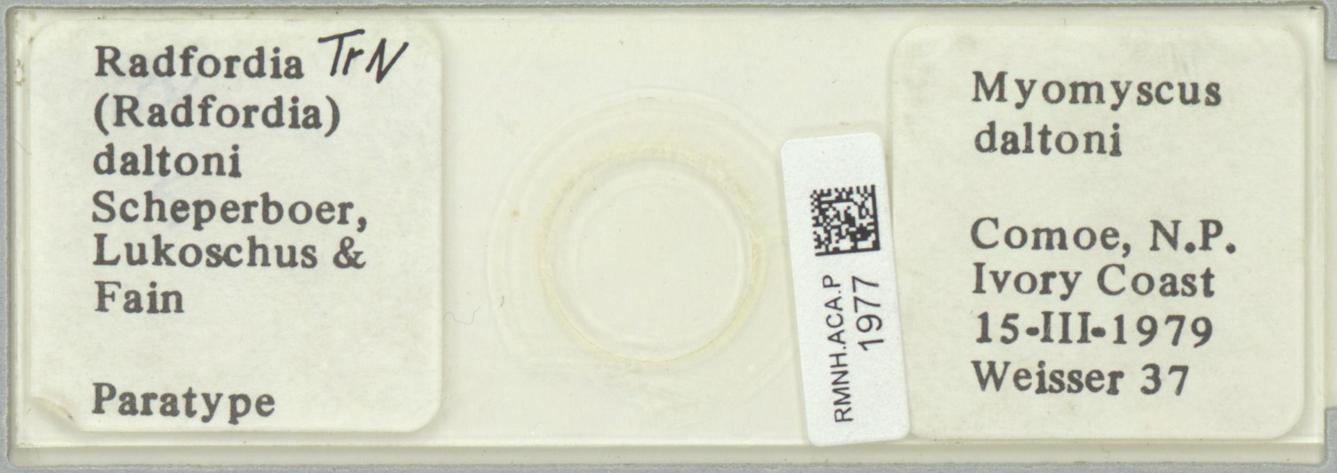 RMNH.ACA.P.1977 | Radfordia (Radfordia) daltoni Scherperboer, Lukoschus & Fain