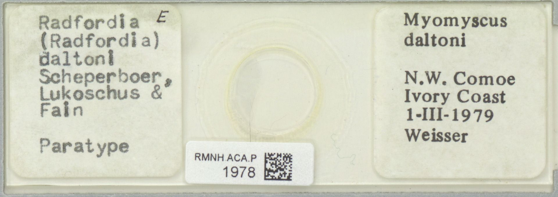 RMNH.ACA.P.1978   Radfordia (Radfordia) daltoni Scherperboer, Lukoschus & Fain