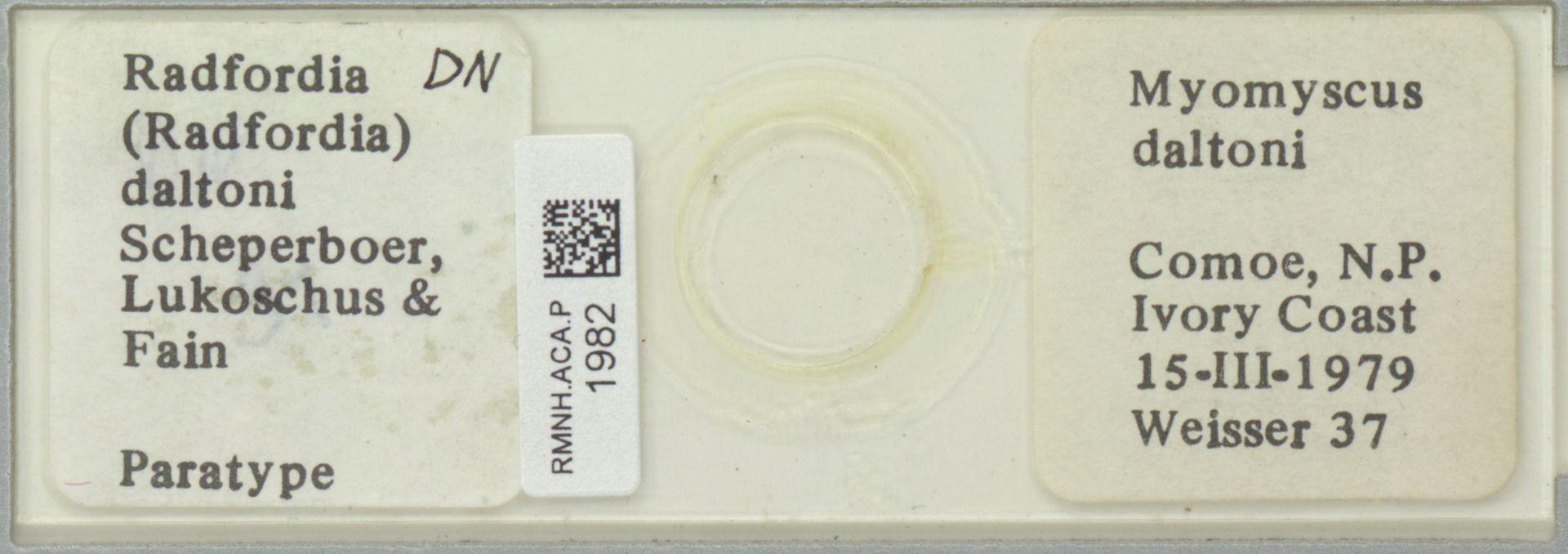 RMNH.ACA.P.1982 | Radfordia (Radfordia) daltoni Scherperboer, Lukoschus & Fain