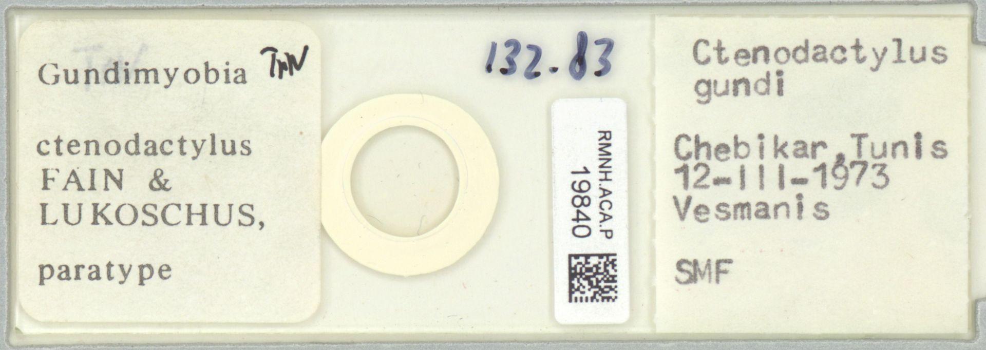 RMNH.ACA.P.19840 | Gundimyobia ctenodactylus Fain & Lukoschus