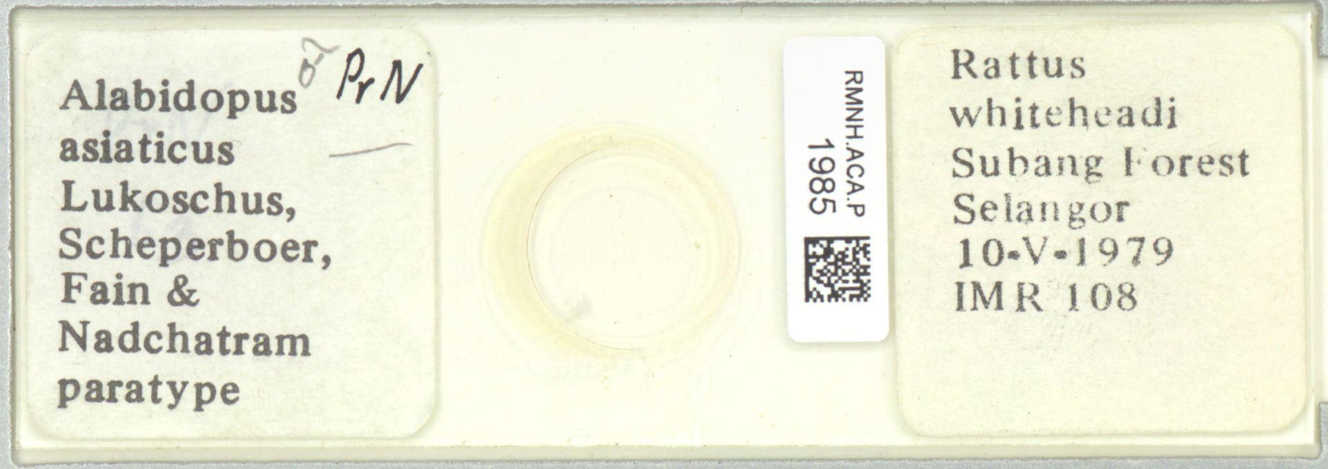 RMNH.ACA.P.1985 | Alabidopus asiaticus Lukoschus, Scheperboer, Fain & Nadchatram