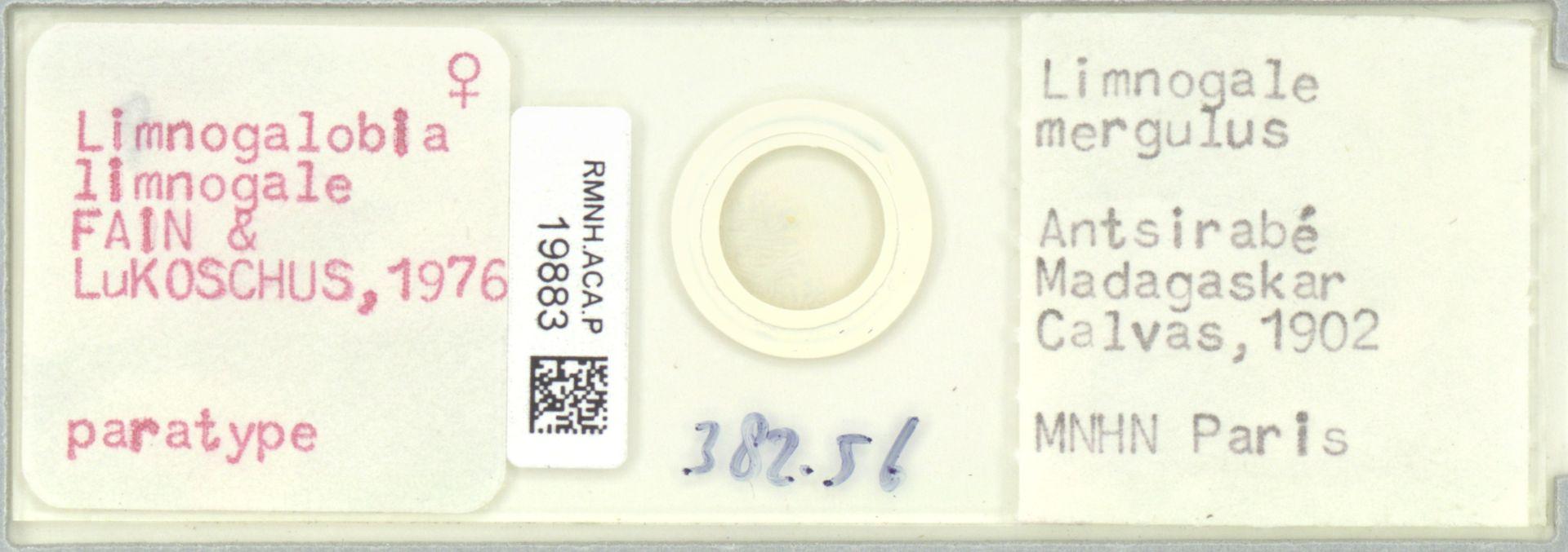 RMNH.ACA.P.19883 | Limnogalobia limnogale Fain & Lukoschus, 1976