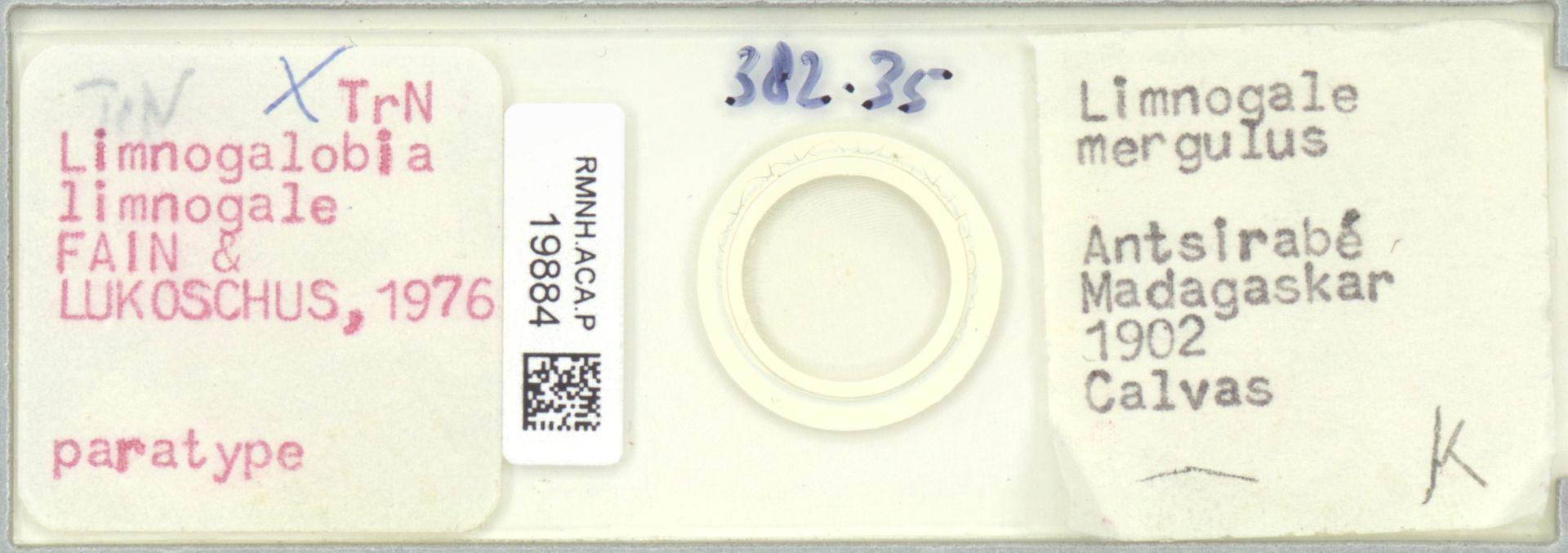 RMNH.ACA.P.19884   Limnogalobia limnogale Fain & Lukoschus, 1976
