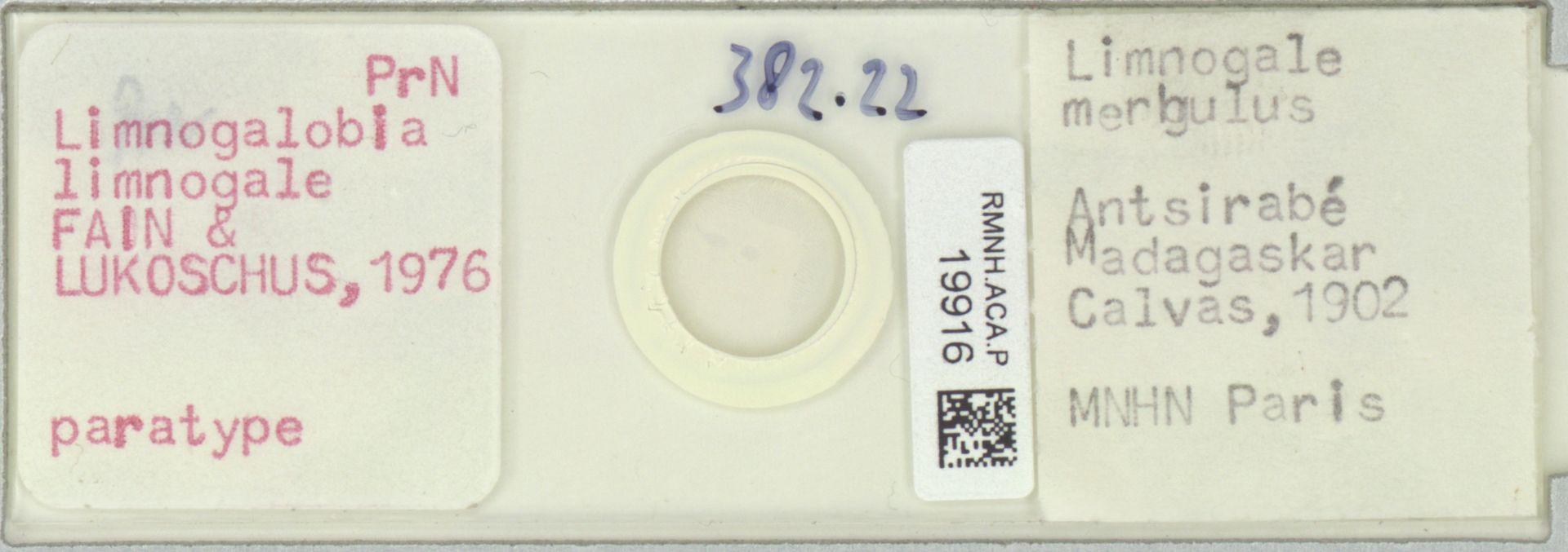 RMNH.ACA.P.19916 | Limnogalobia limnogale Fain & Lukoschus, 1976