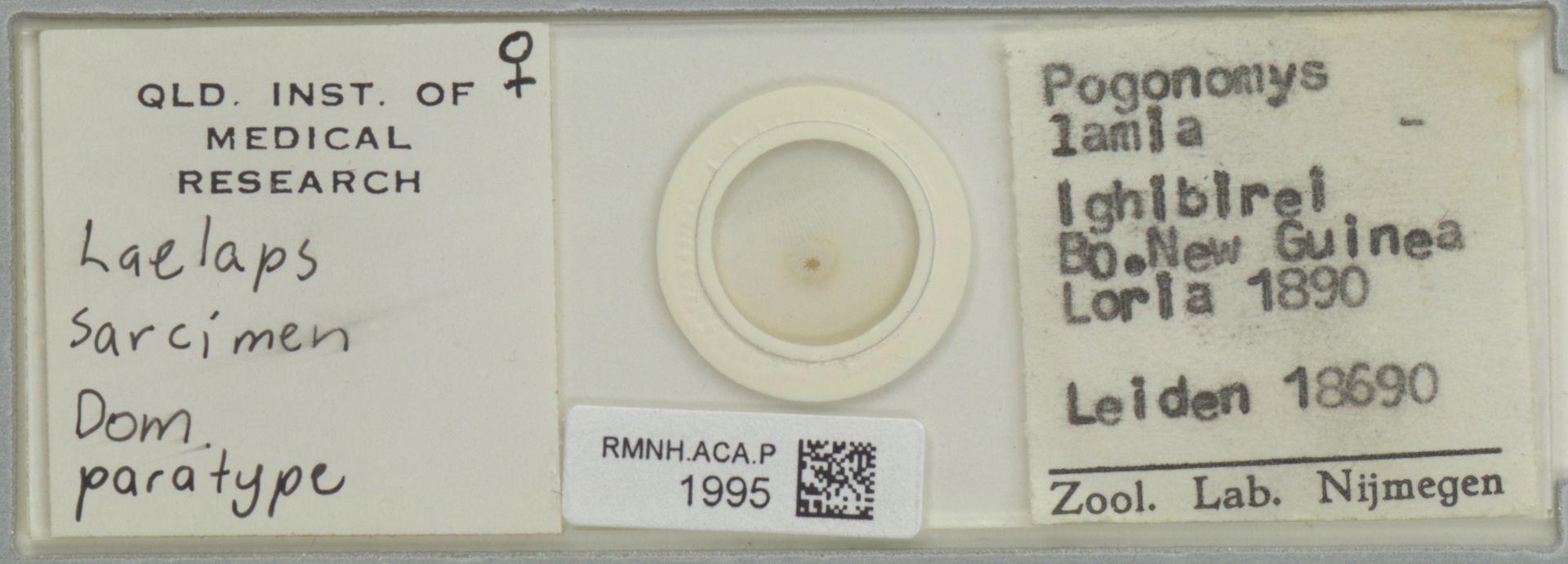 RMNH.ACA.P.1995 | Laelaps sarcimen Domrow