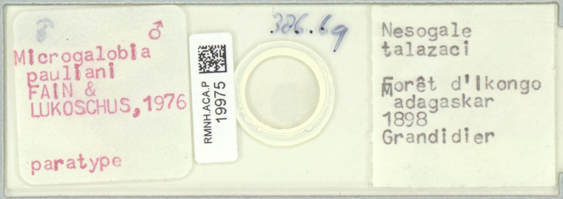 RMNH.ACA.P.19975 | Microgalobia pauliani Fain & Lukoschus 1976