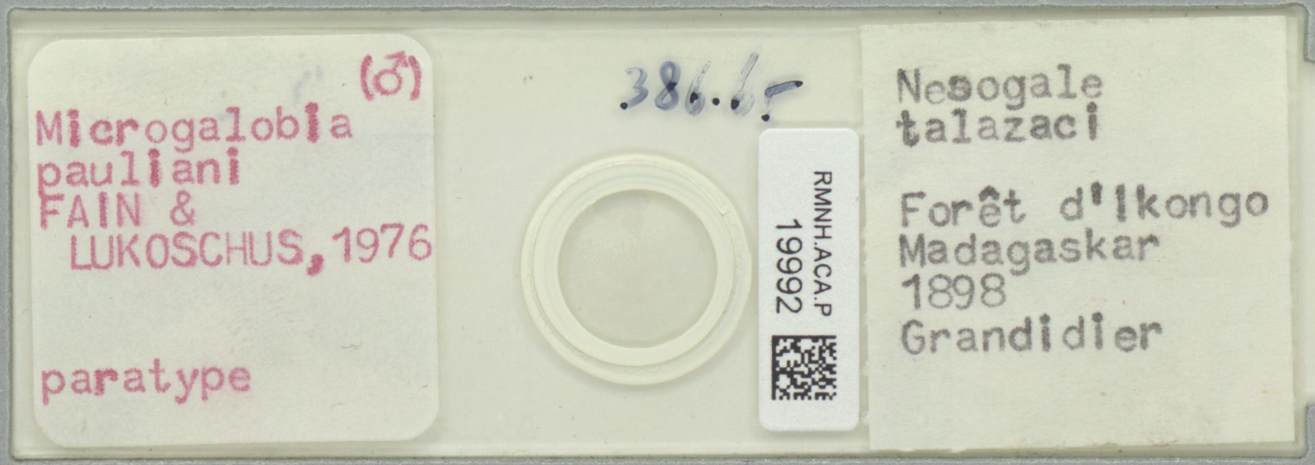 RMNH.ACA.P.19992   Microgalobia pauliani Fain & Lukoschus 1976