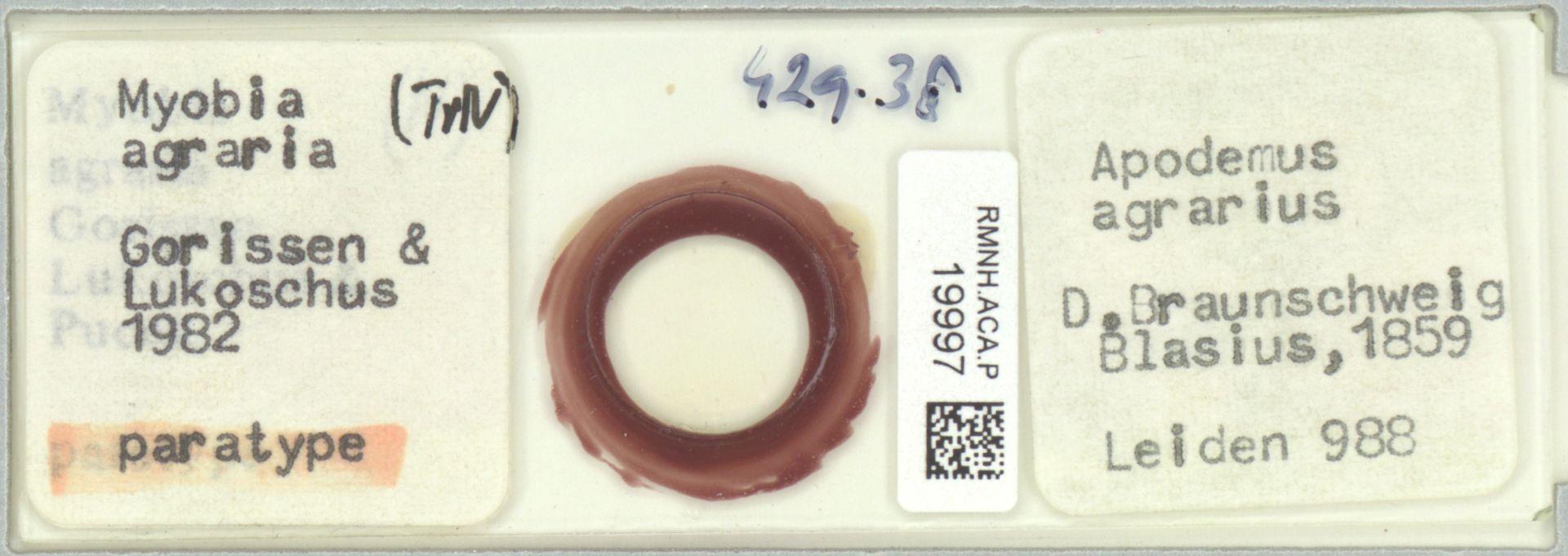 RMNH.ACA.P.19997 | Myobia agraria
