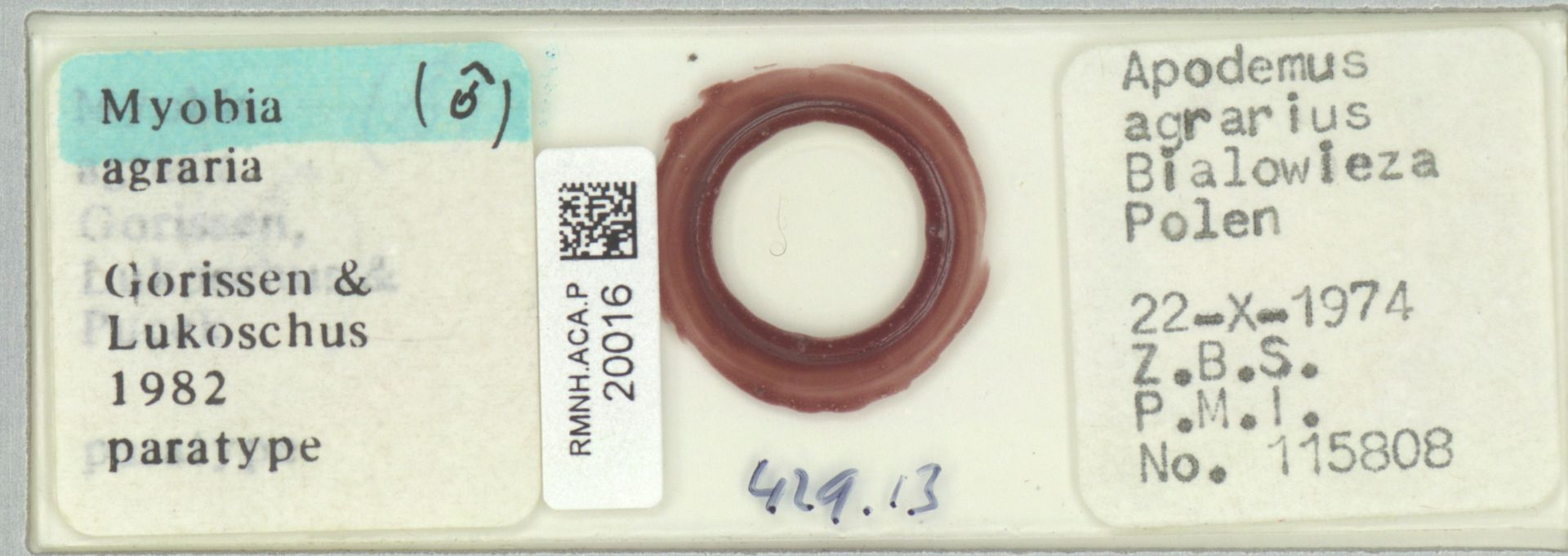 RMNH.ACA.P.20016 | Myobia agraria
