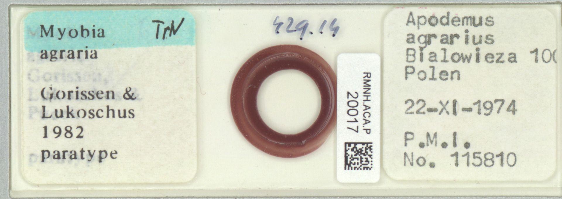RMNH.ACA.P.20017 | Myobia agraria