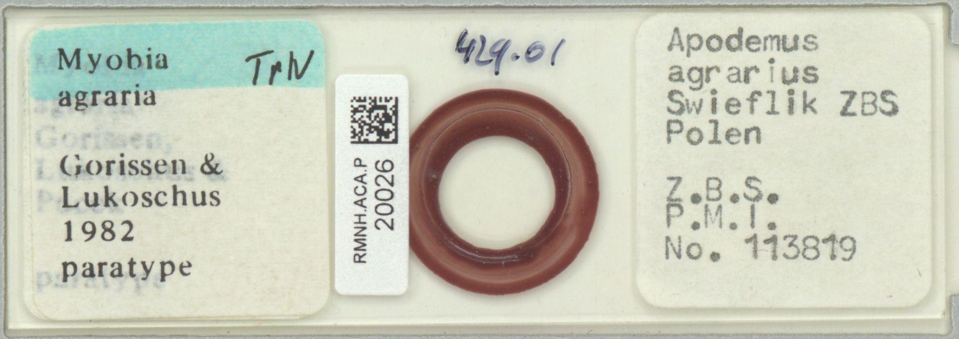 RMNH.ACA.P.20026 | Myobia agraria