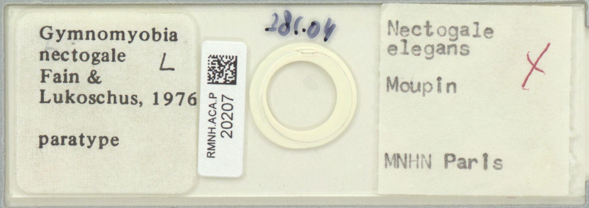 RMNH.ACA.P.20207   Gymnomyobia nectogale