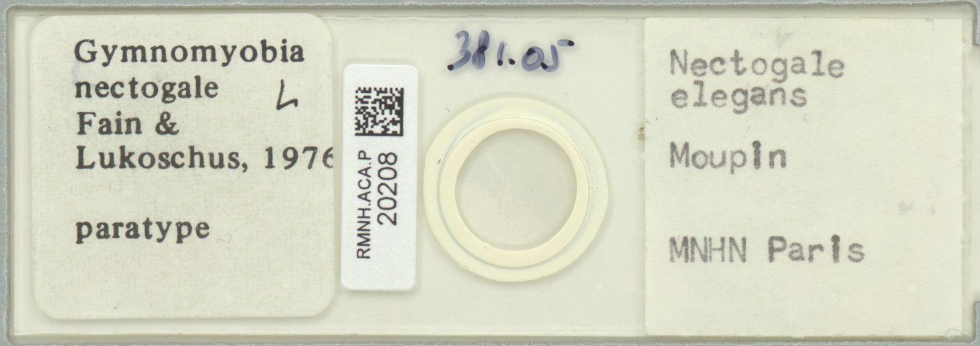 RMNH.ACA.P.20208 | Gymnomyobia nectogale