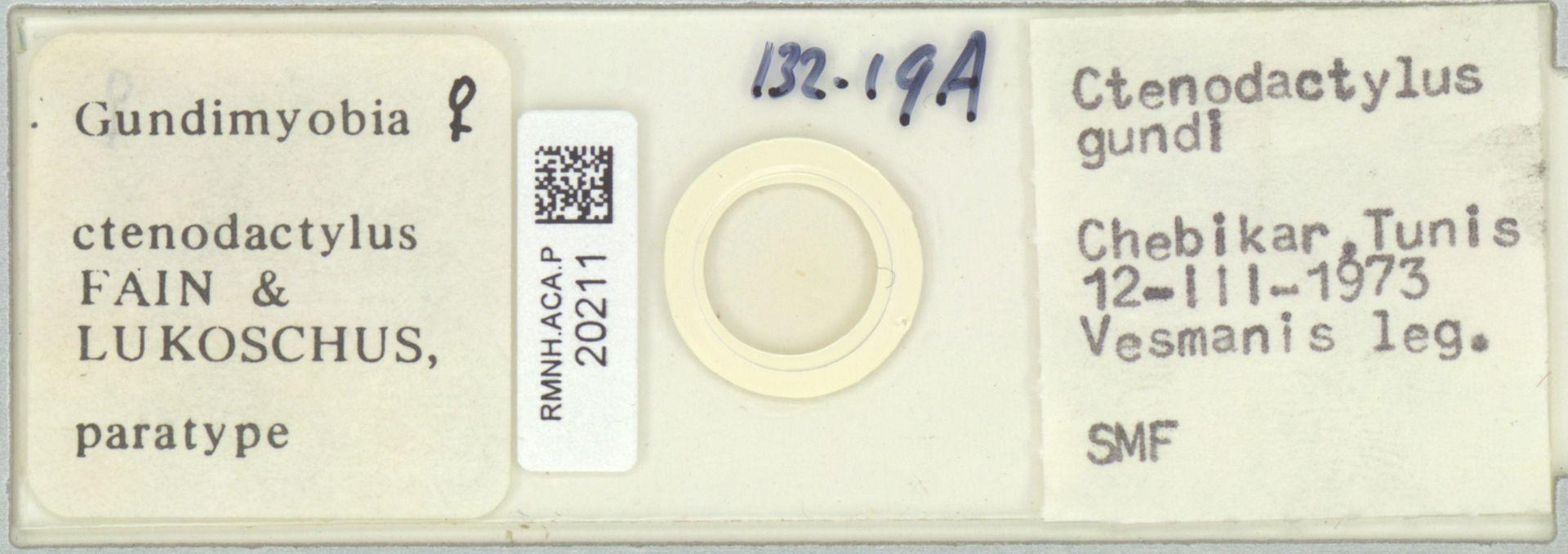 RMNH.ACA.P.20211 | Gundimyobia ctenodactylus