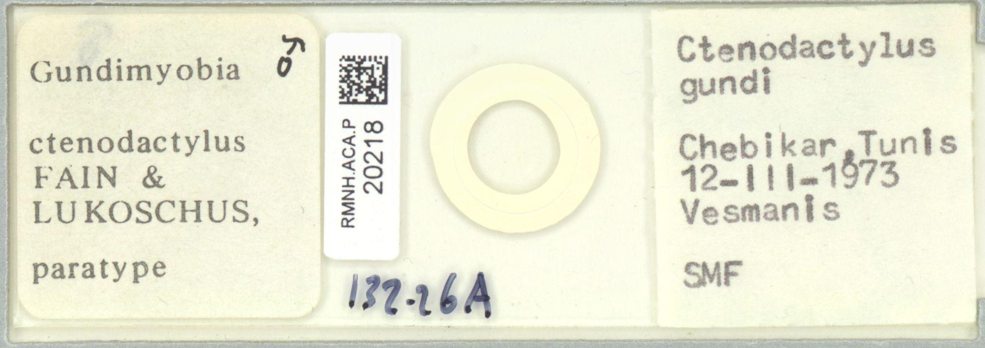 RMNH.ACA.P.20218 | Gundimyobia ctenodactylus