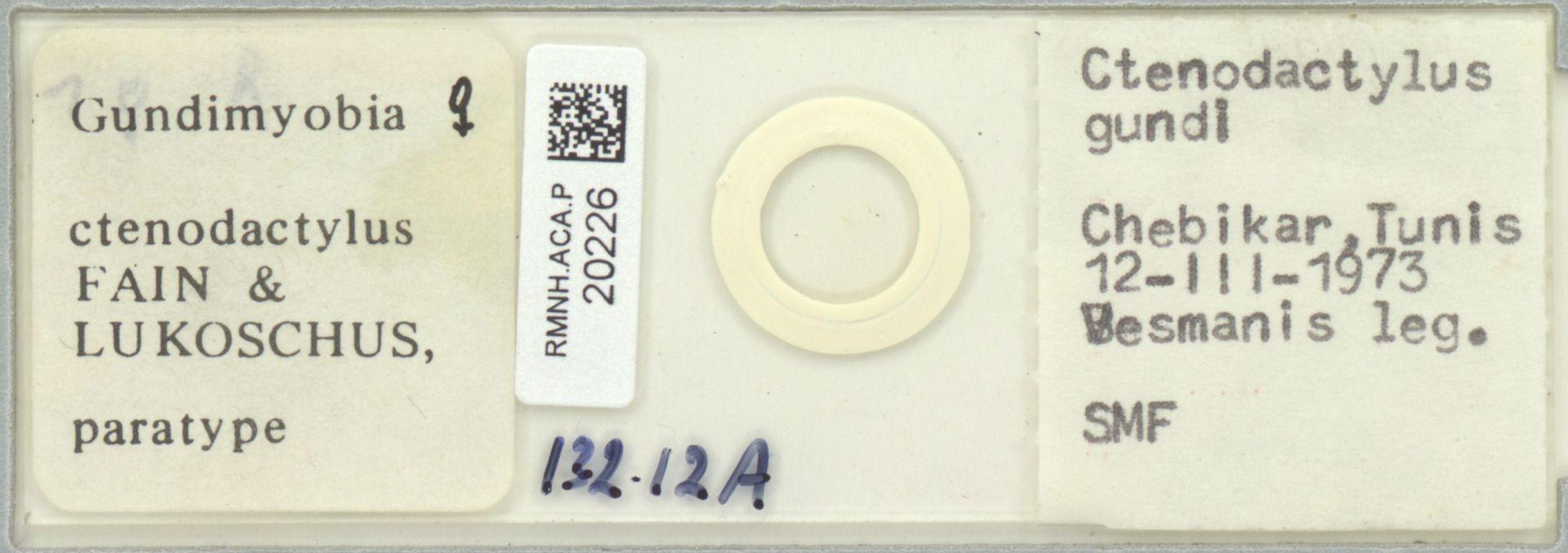 RMNH.ACA.P.20226 | Gundimyobia ctenodactylus
