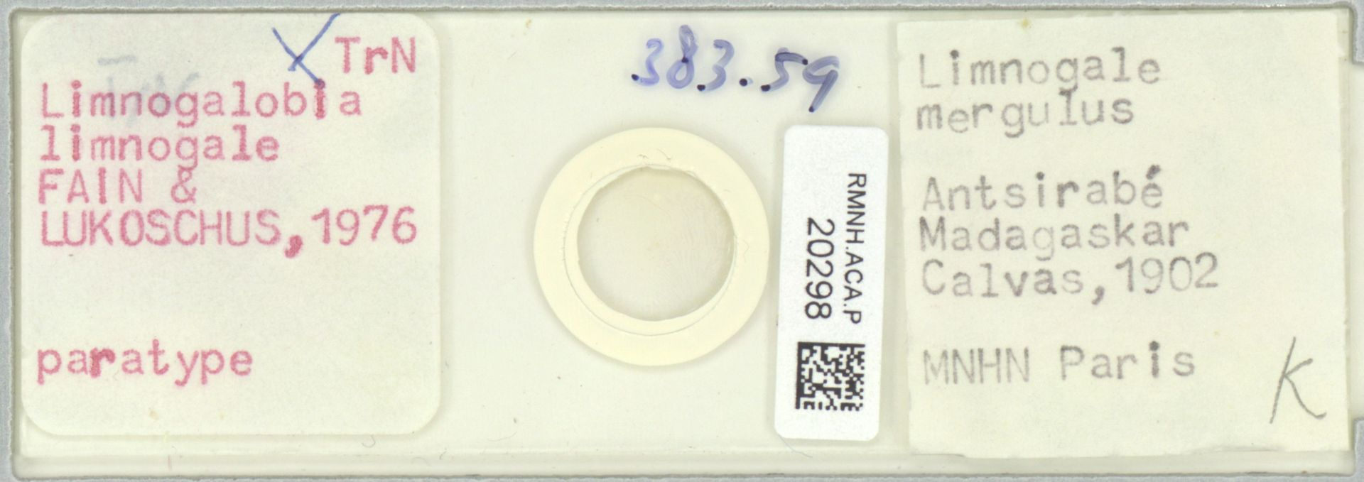 RMNH.ACA.P.20298 | Limnogalobia limnogale