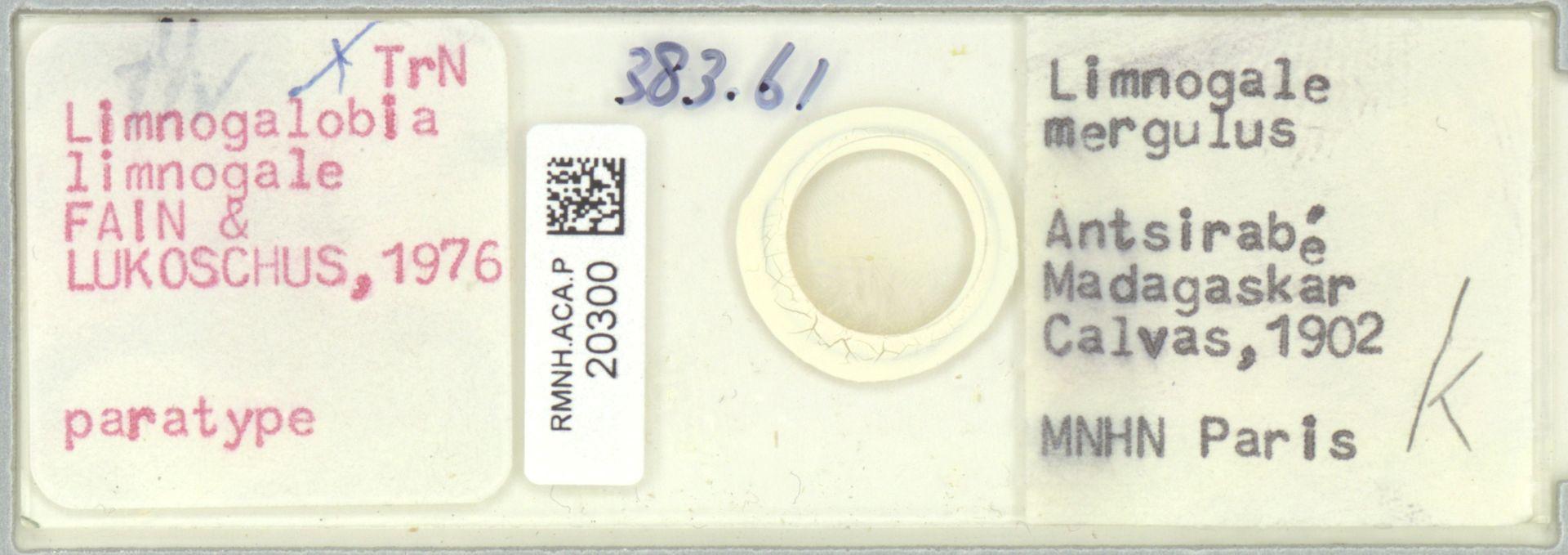 RMNH.ACA.P.20300 | Limnogalobia limnogale
