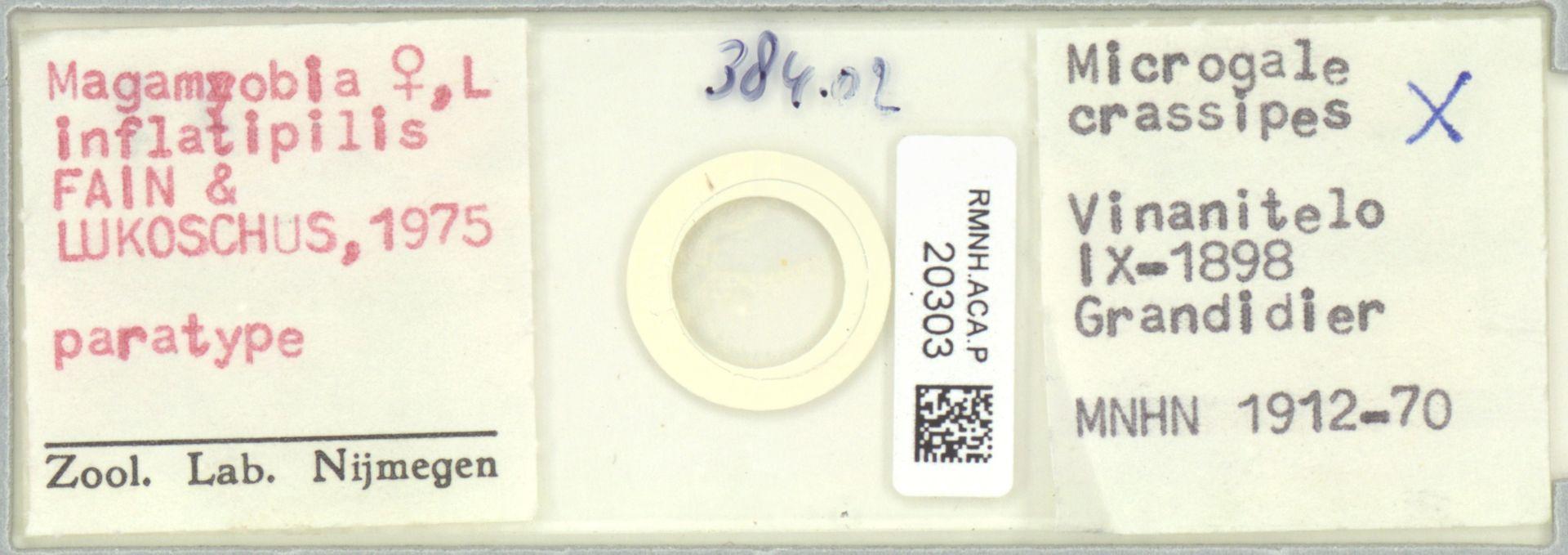 RMNH.ACA.P.20303   Mafamyobia inflatipilis