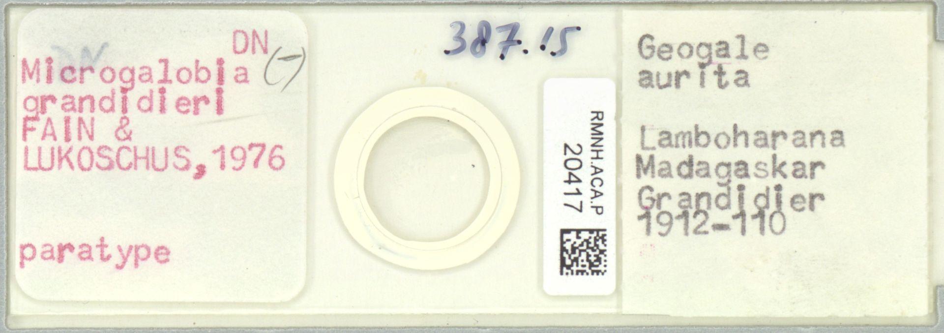RMNH.ACA.P.20417   Microgalobia grandidieri