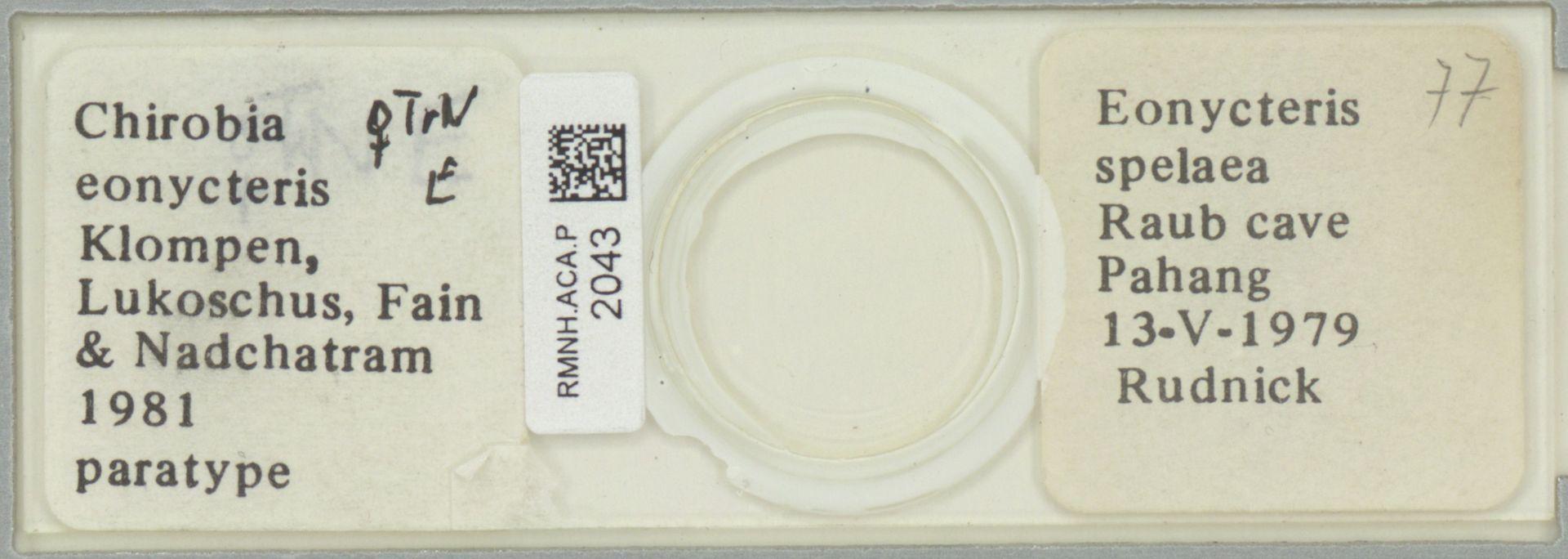 RMNH.ACA.P.2043 | Chirobia eonycteris Klompen, Lukoschus & Nadchatram, 1981