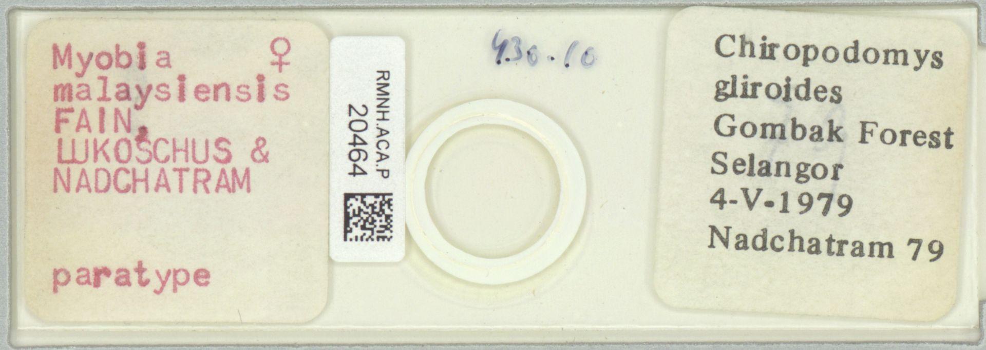 RMNH.ACA.P.20464   Myobia malaysiensis