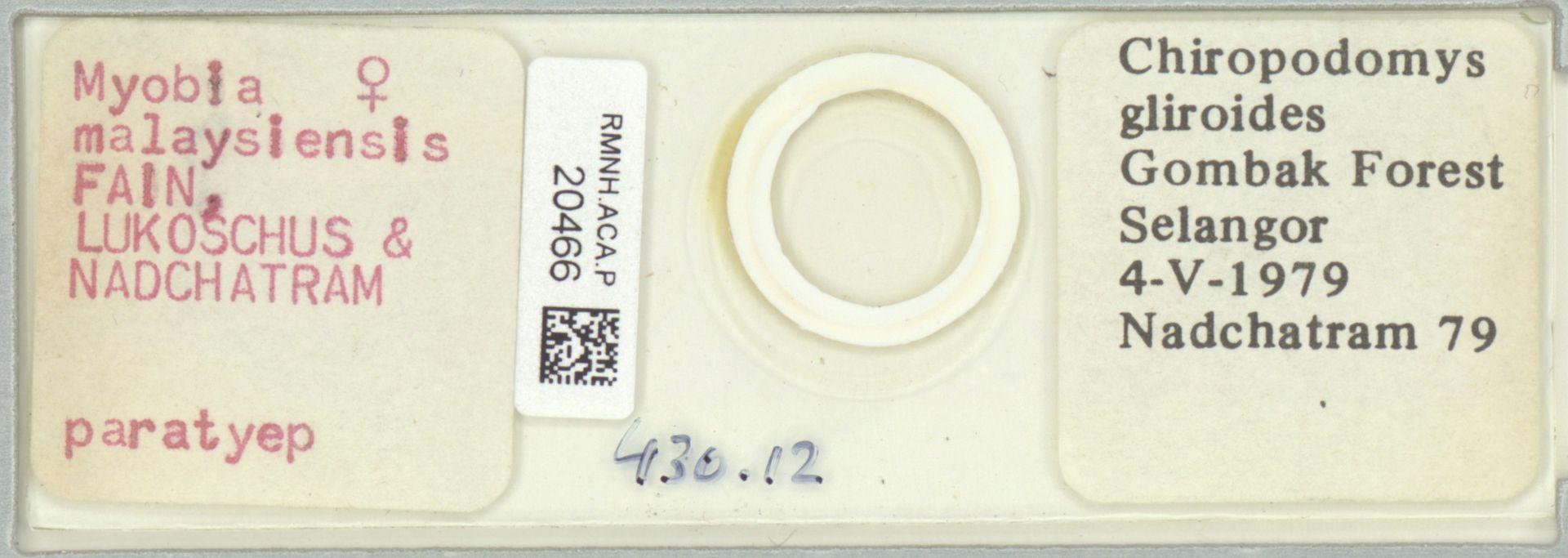 RMNH.ACA.P.20466 | Myobia malaysiensis