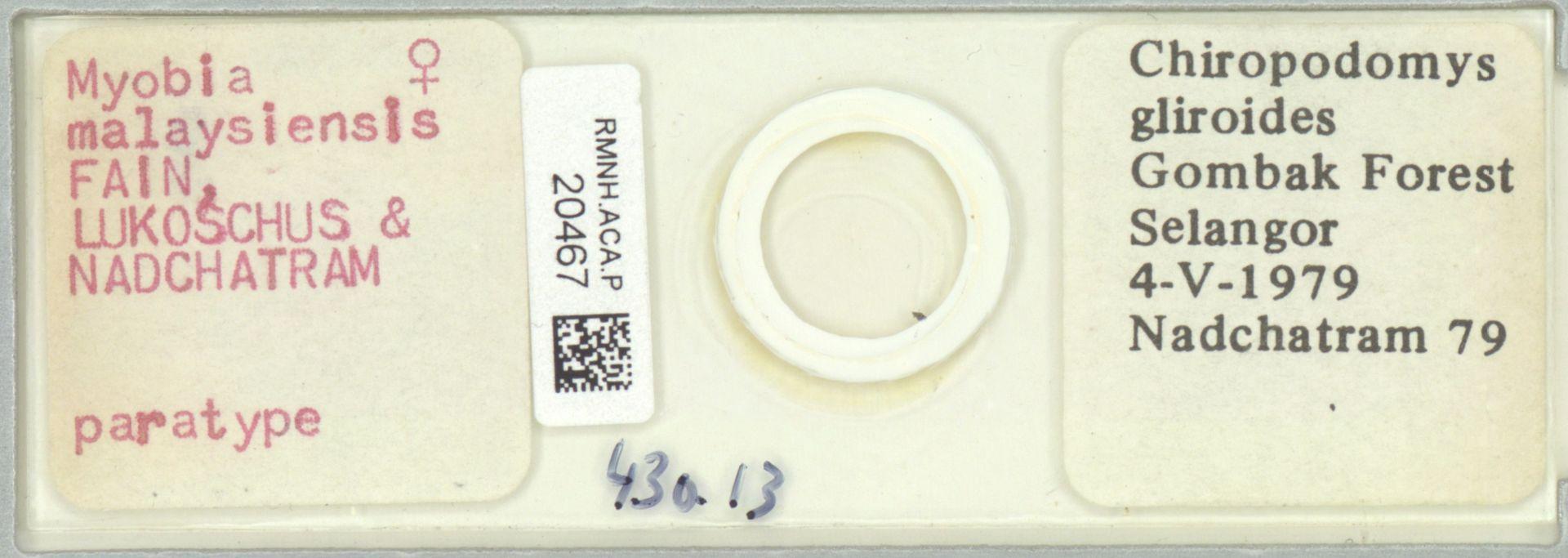 RMNH.ACA.P.20467 | Myobia malaysiensis