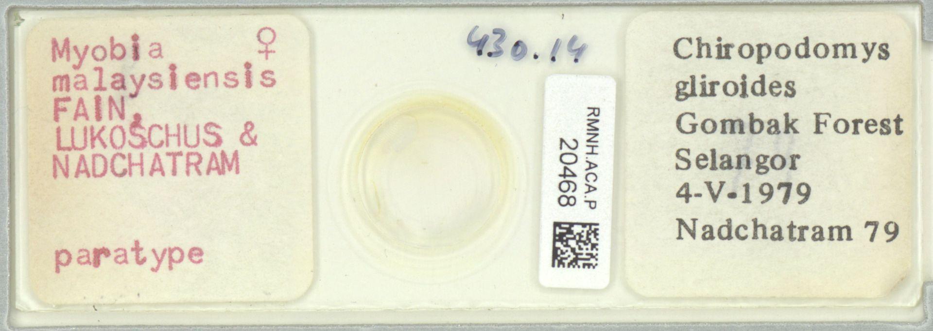 RMNH.ACA.P.20468   Myobia malaysiensis