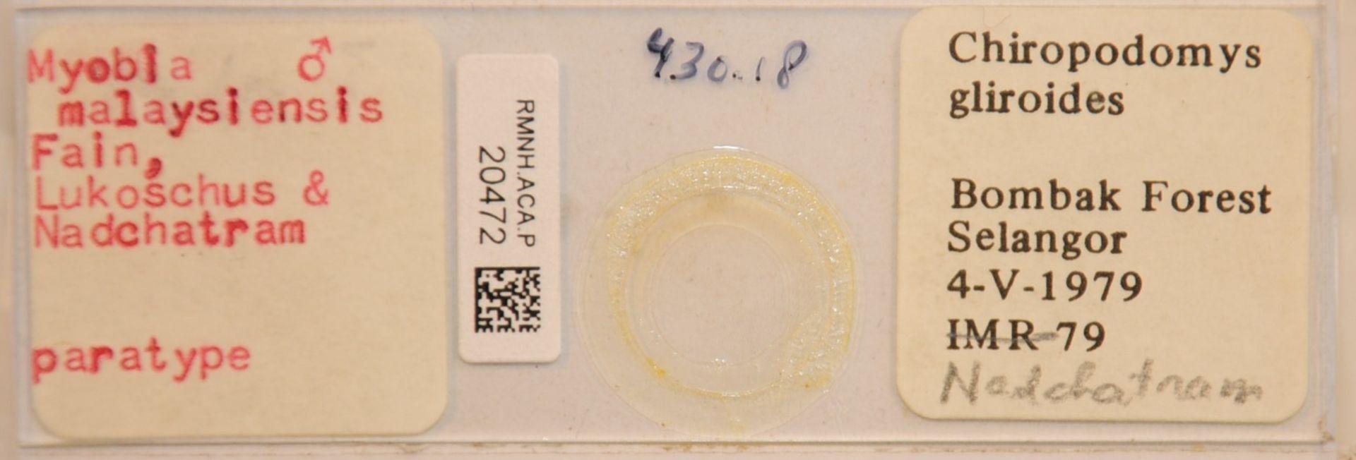 RMNH.ACA.P.20472 | Myobia malaysiensis